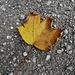 der Herbst kommt allmählich...