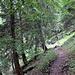 der Wanderweg nimmt teilweise Abkürzungen durch den Wald.