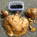 Die kulinarische Ausbeute: ein riesiger, leider nicht mehr ganz frischer Steinpilz und würzige Heidelbeeren
