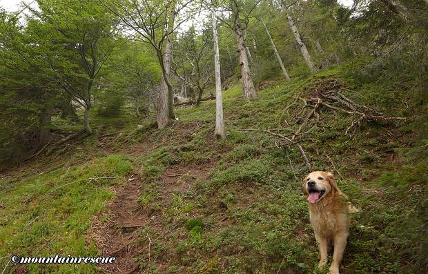 Zahlreiche Wildfährten erschweren die Orientierung bzw. Wegfindung