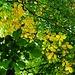 Jetzt scheint es amtlich zu sein: Das Jahr 2014 geht als Jahr ohne Sommer in die Geschichte ein - es ist bereits Herbst...