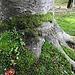 Ein Baum scheint sich ins Moos zu krallen.