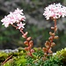 Hübsche Blüten am Gipfel.