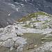 Steinböcke in der Nähe der Lämmerenhütte