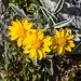 prächtige Flora erfreut das Auge und das Herz