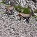 Zuschauer beim Abstieg vom Altmannsattel