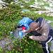 Blühende Alpenrosen - und mein Bruder, der mit dem ENORM SCHWEREN Kocher Tee macht