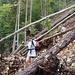 ...auch verlegen sehr viele umgestürzte Bäume den Weg