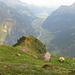 Die Alp Blacki ist ein Katzensprung vom Bristenstäfeli aus.