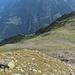 Im Aufstieg zum Nordwest-Grat. Man sieht auf dem Photo die drei Alpen, welchen wir beim Aufstieg begegneten.
