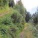 Einer der zwei Zickzack Wege von Bristenstäfeli nach Amsteg (Es hat noch einen steileren Wanderweg hinauf).