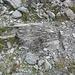 Genau, ein recht grosser Baumstamm im Gletschervorfeld des Vadret da Tschierva auf ca. 2300m. Zeuge einer früheren Warmzeit?!