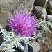 die eher spärlich vorhandene Flora am Ararat