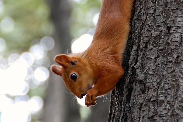 Zahme Eichhörnchen