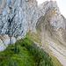 Ein paar Meter weiter vorne verlasse ich die Felswand, um zum alten Tomliweg zu gelangen