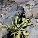 rarissima vegetazione
