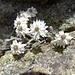 ... und ein weiteres Grüppchen der speziellen, schönen Blumen ...
