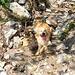 Beim Abstieg wird Abkühlung in jedem Rinnsal gesucht - ja Luca du hast leicht lachen, ich kann mich nicht so einfach da reinlegen ;-)