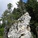 die Bäume scheinen aus dem Fels zu wachsen