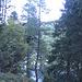 Il lago di Campietto con il suo bel colore si intravede fra gli alberi.
