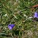 Auch die Flora hat ihren Reiz.