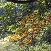 Sintomi d'autunno