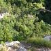 Blick von oben in die Steinwandklamm
