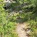 Bergpfad auf dem Wildikinteilstück