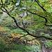 Herbstlich präsentierte sich das Brüeltobel.