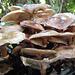 Ein Pilzhaufen oder anderst gesagt: haufenweise Pilze ;-)