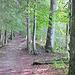 Ab durch den Wald; Die ganze Strecke verläuft im Schatten der Bäume.