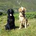 Meine beiden treuen Bergkammeraden Shaddy (10J) und Blondie Finnley (5J) - wie immer mit Freude dabei.