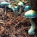 Verzauberte Pilze