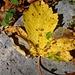 kein unbeschriebenes Herbstblatt.