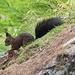 Ein Eichhörnchen auf frischer Tat ertappt.