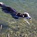 Timi geniesst ein kühles Bad. Herrchen [u wam55] wartet am Ufer.