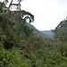 Im dichten Urwald auf ca. 2000 m Höhe. Also noch weit unten. ;-)