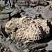 <b>Grovacca, roccia carbonatica porosa (Rauhwacke).</b>
