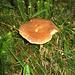I funghi sono veramente onnipresenti.