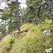 Weiterweg auf dem Gipfelplateau