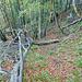 Dem umgefallenen Baum entlang hinunter