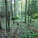 Die Senke mit Urwald-Flair erreicht