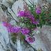 Auch im Herbst hats noch schöne Blüemli am Wegrand