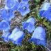 Bunte Blumen im kargen Umfeld