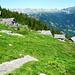 Aufstieg zum Catt da Ribia - Alpe Cropia, 1690 m