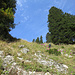 steil führt unsere Route den Hang zwischen den Bäumen hinauf.