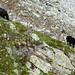 Rosso di Ribia, 2547m - Schafe auf 2300m