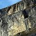 Felsbänder oberhalb der Firenplanggen – mit vier grasenden Gemsen on top.