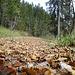 kurz darauf wieder absolute Herbstidylle
