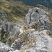 den kurzen Gipfelgrat zurück;<br />vor dem Turm dann in die Rinne nach links